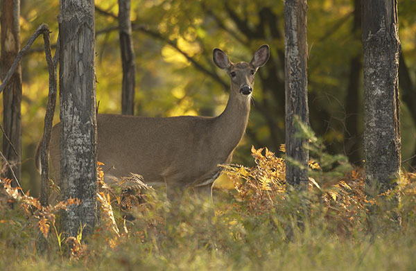 Michigan Sets New Deer Hunting Regulations Designed to Fight CWD