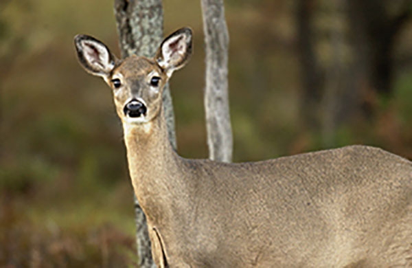 Michigan Approves 2019 Deer Regulations Related to Chronic Wasting Disease