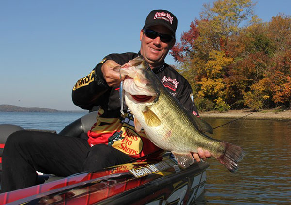 Small Swimbaits Are a Good Fit for Michiana Waters