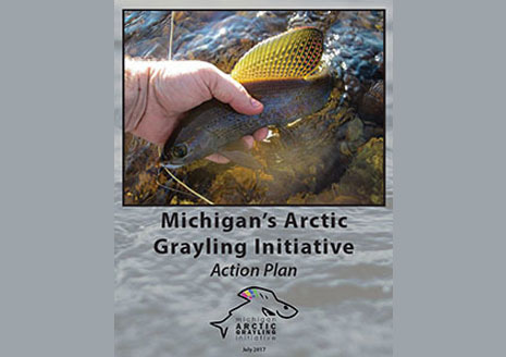 Michigan Moves Closer to Restoring Arctic Grayling