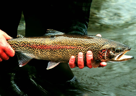 Surefire Spring Trout Strategies