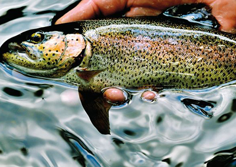 Trout Season on Inland Streams Opens Saturday