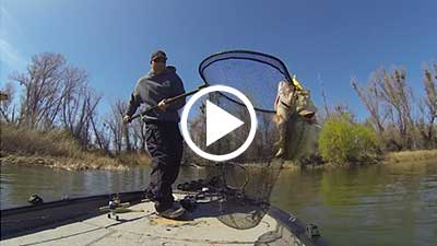 Swimbaits: One Cast Two Giant Bass