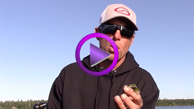 Neil Vande Biezen: How to Use Swimbaits in Cold Water