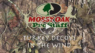 Turkey Decoys in the Wind