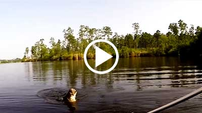 Fascinating Video of Leaping Big Bass