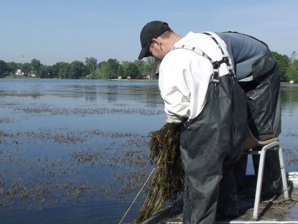 Weed Treatments Hot Button with Anglers