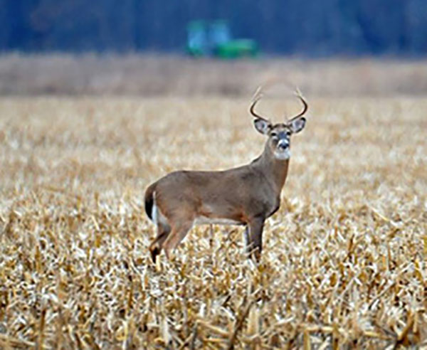 2019 Deer Season Improved – Will This Year Deliver the Same?