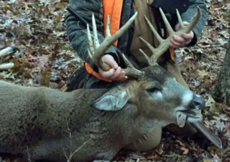 Buck Harvest Up Across Indiana